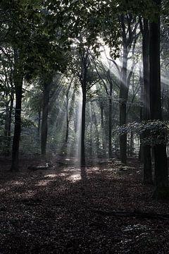 Zonnestralen door de bomen van DuFrank Images