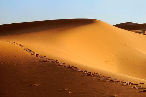 Zandduinen in Erg Chebbi woestijn Zuid Marokko met kamelen sporen. van Gonnie van de Schans