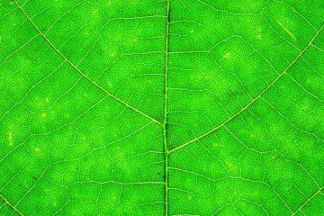 Herbstblätter mit Adern von Carola Schellekens