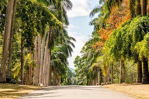 Een weg door een botanische tuin in Colombo, Sri Lanka met veel verschillende bomen van