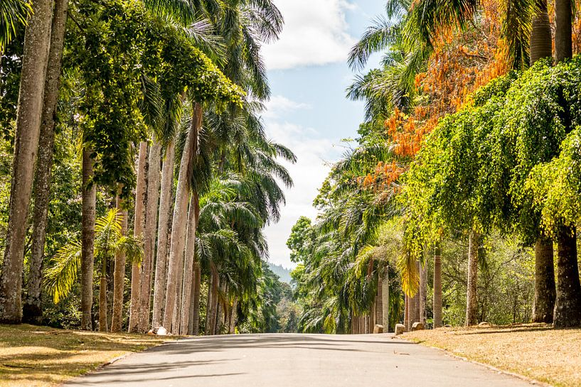 Een weg door een botanische tuin in Colombo, Sri Lanka met veel verschillende bomen van Hein Fleuren