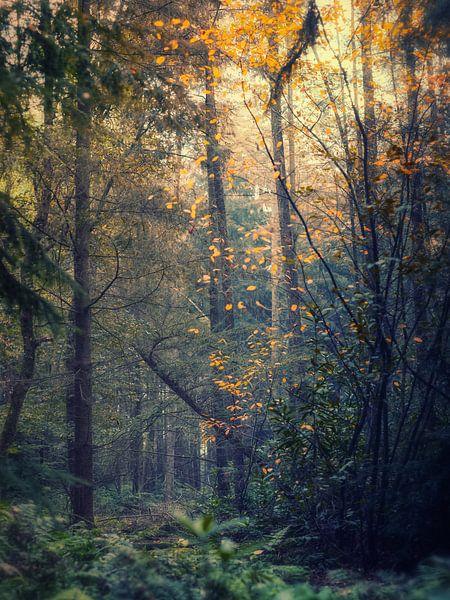 Transitions 2 (Herfst impressie) van Remco Lefers