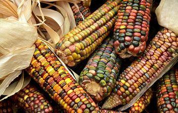 Bunter Mais von Ulrike Leone