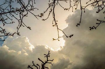 Clouds and Branches sur Yvon van der Wijk