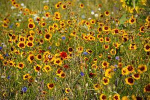 wilde bloemen van Henriette Tischler van Sleen