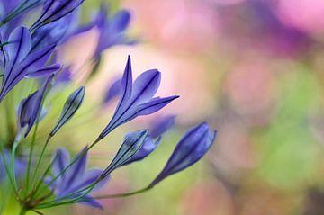 Blauwe bloemen von Corinne Welp