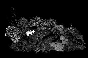 Herbst in Schwarz-Weiß von Jan Tuns