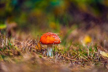 Pilz in Herbstlandschaft von Bas Fransen