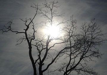 zo maar een boom von Henk Speksnijder