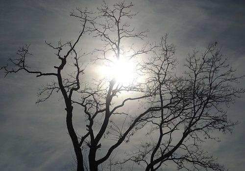 zo maar een boom van