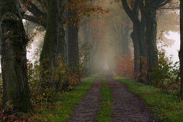 Herbstlicher Wald von Jacco van Son