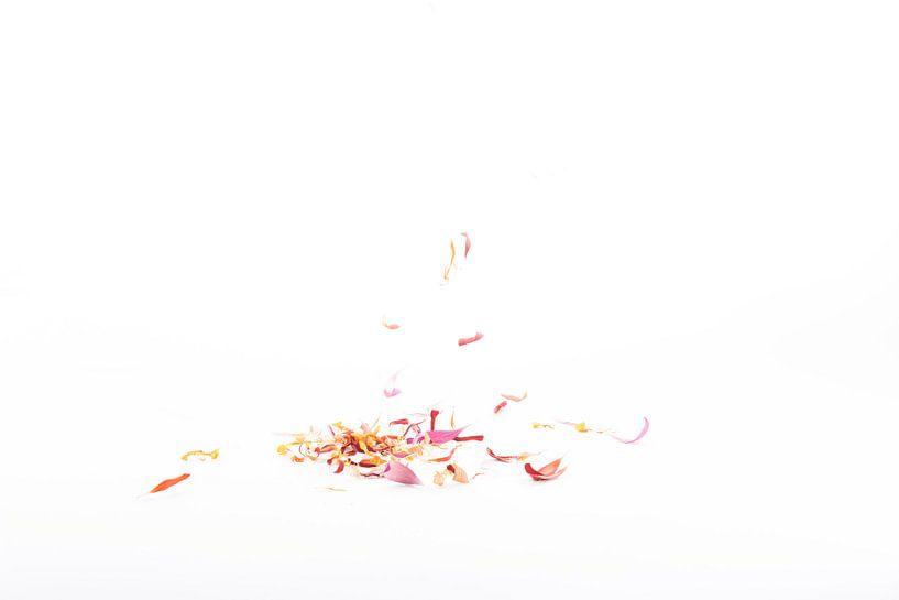 vallende bloemblaadjes 4 van Anita Visschers
