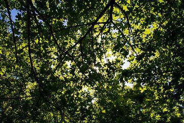 Sonnenstrahlen scheinen durch den Baum. von Stedom Fotografie