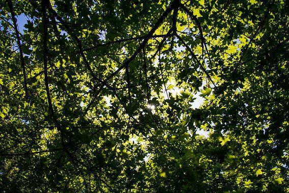 Zonnestralen schijnen door de boom heen