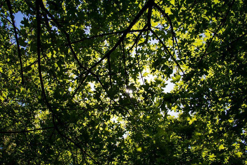 Zonnestralen schijnen door de boom heen van Koop je Canvas