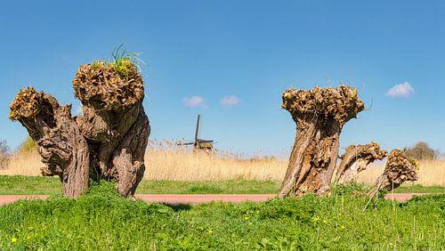 Windmill De Ambachtsmolen, Oudorp Alkmaar,, North Holland, The Netherlands, sur