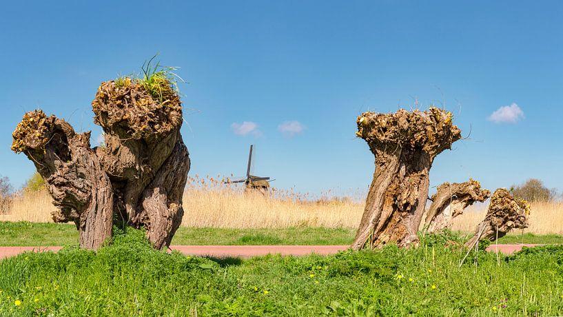 Grondzeiler windmolen De Ambachtsmolen, Oudorp Alkmaar, , Noord-Holland, Nederland, van Rene van der Meer