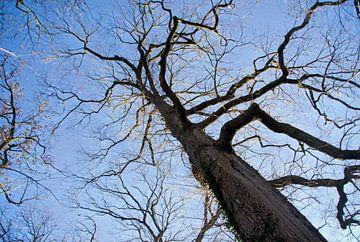 Een boom de zon en de blauwe lucht. van Jurjen Jan Snikkenburg