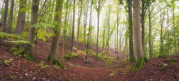 Früher Morgen im grünen Wald von Tobias Luxberg