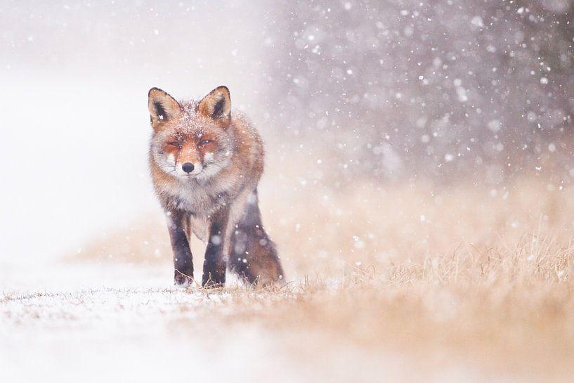 Snowstorm van Pim Leijen