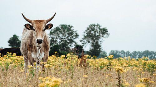 Wild Rund in Nederlands landschap