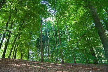 Prachtig bos bij Nationaal Park Veluwezoom van Nel Diepstraten