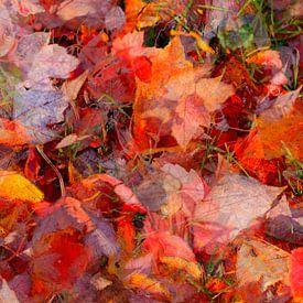 Ahornblatt, buntes Herbstlaub auf dem Boden liegend von Torsten Krüger