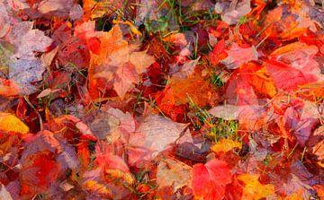 feuille d'érable, feuilles d'automne colorées reposant sur le sol