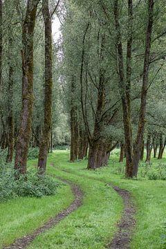 Grün, grün, grün von Jefra Creations