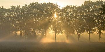 Nebelharfen durch die Bäume von Michel Knikker