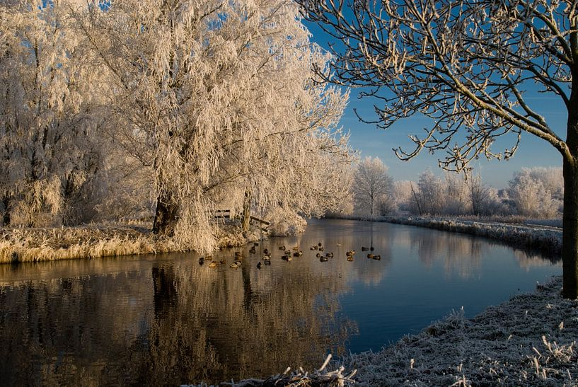 Winter Wonderland van Mike Fortgens