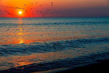Sonnenuntergang am Meer von Björn van den Berg