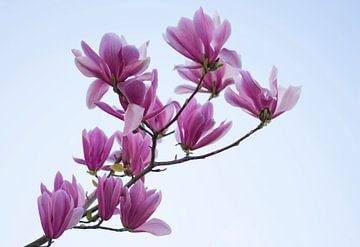 Magnolia Tak van Charlene van Koesveld