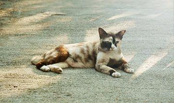 Kat in de zon van MM Imageworks