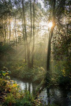 Naturfoto des Waldes mit der Morgensonne von Nicole Jenneskens