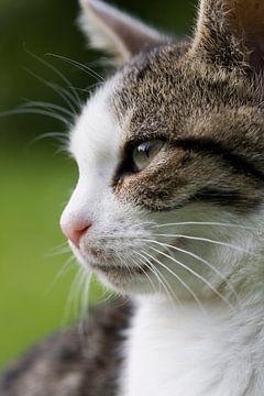 Katze sur Falko Follert