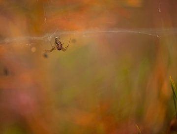 Spin in web van