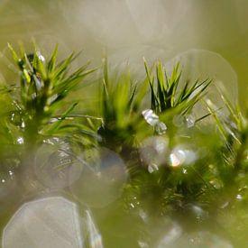 Mos met waterdruppels in tegenlicht van Martin Stevens