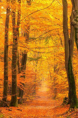Pad door een goudgeel bos tijdens een prachtige mistige herfstochtend