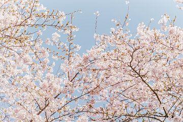Bloesem boom van Myrthe Vlasveld