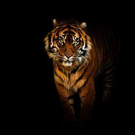 Tiger in der nacht von Tim Abeln