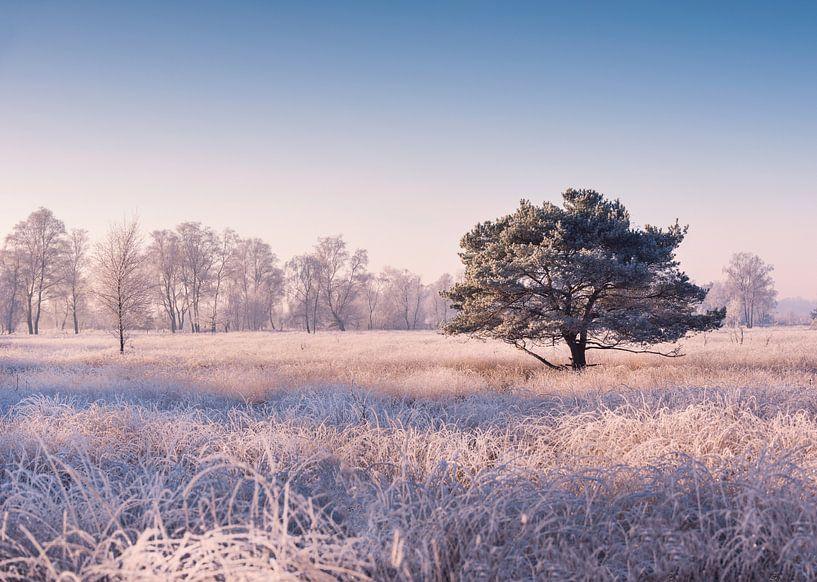 Cold morning Haaksbergerveen van Davy Sleijster