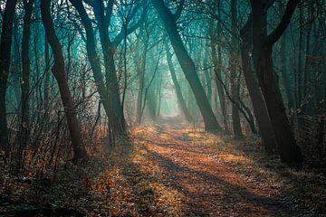 duin en bos van Pieter Heine