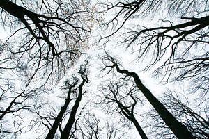 Dansende bomen in de herfst