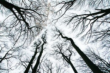 Dansende bomen in de herfst van Cocky Anderson