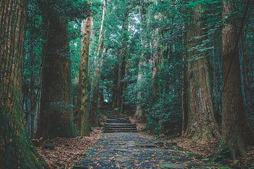 Diese jahrhundertealte Pilgerroute steht auf der Unesco-Liste des Weltkulturerbes. von Claudio Duarte