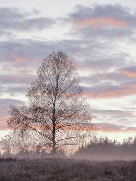 Birke im Herbst von Max Schiefele