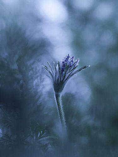 Ice flower von bird bee flower and tree