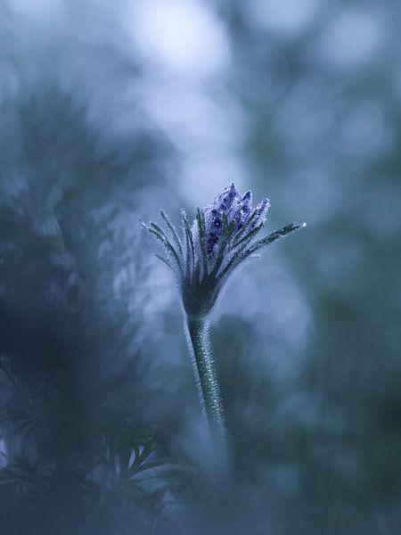 Ice flower van bird bee flower and tree