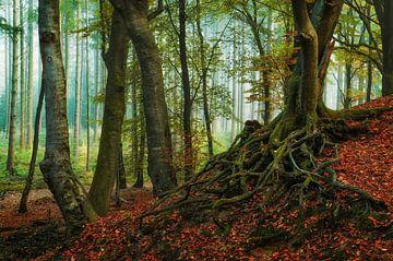 Roots von Martin Podt